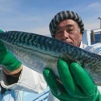 外房勝浦川津の寒サバ~ヤリイカ狙い!!。のサムネイル