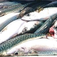 3月3日 外房勝浦川津のマサバ〜イカのリレー釣り!!。のサムネイル